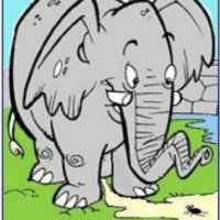Os elefantes têm medo de formigas!