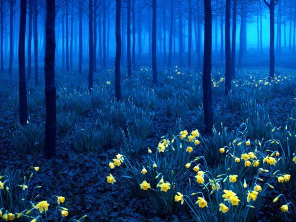 Black Forest (Alemanha)