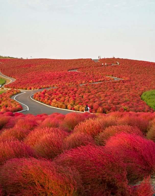 Hitachi Seaside Park (Japão)