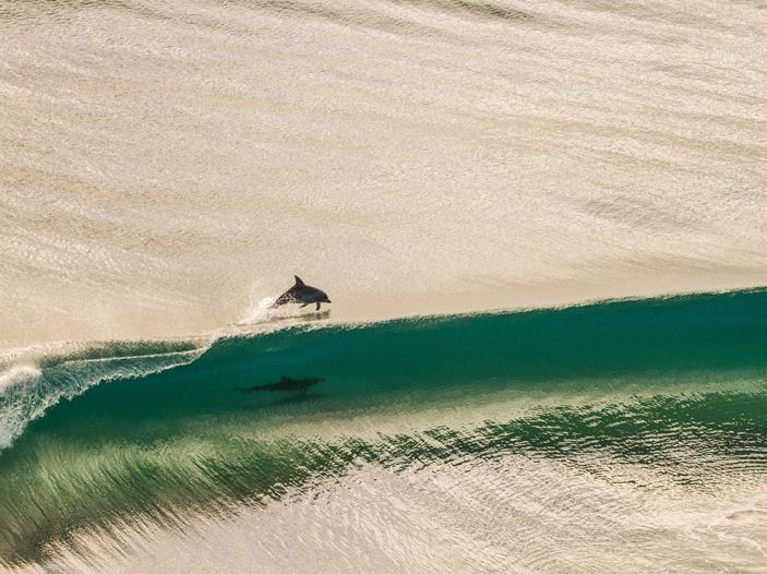 http://photography.nationalgeographic.com/photography/photo-of-the-day/dolphin-point-danger-australia