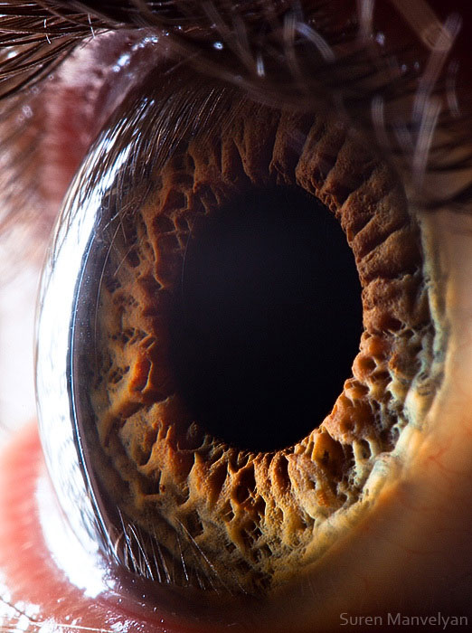 extreme-close-up-of-human-eye-macro-suren-manvelyan-12