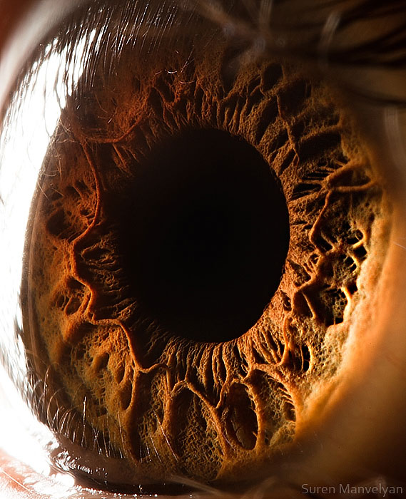 extreme-close-up-of-human-eye-macro-suren-manvelyan-17