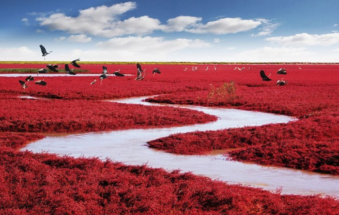panjin-red-beach-china-1