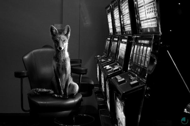 Totem (Striking photographs of woodland creatures in urban locations) © Photographer Jason Mc Groarty